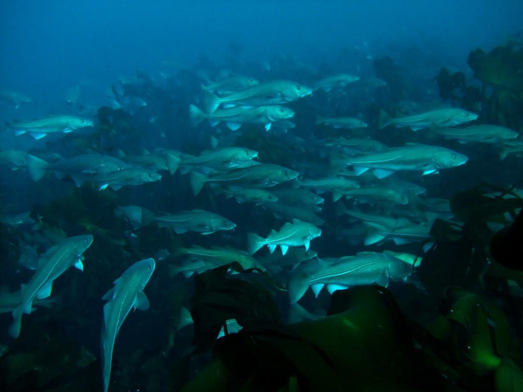 Gulf of Maine Ocean Resource Alliance